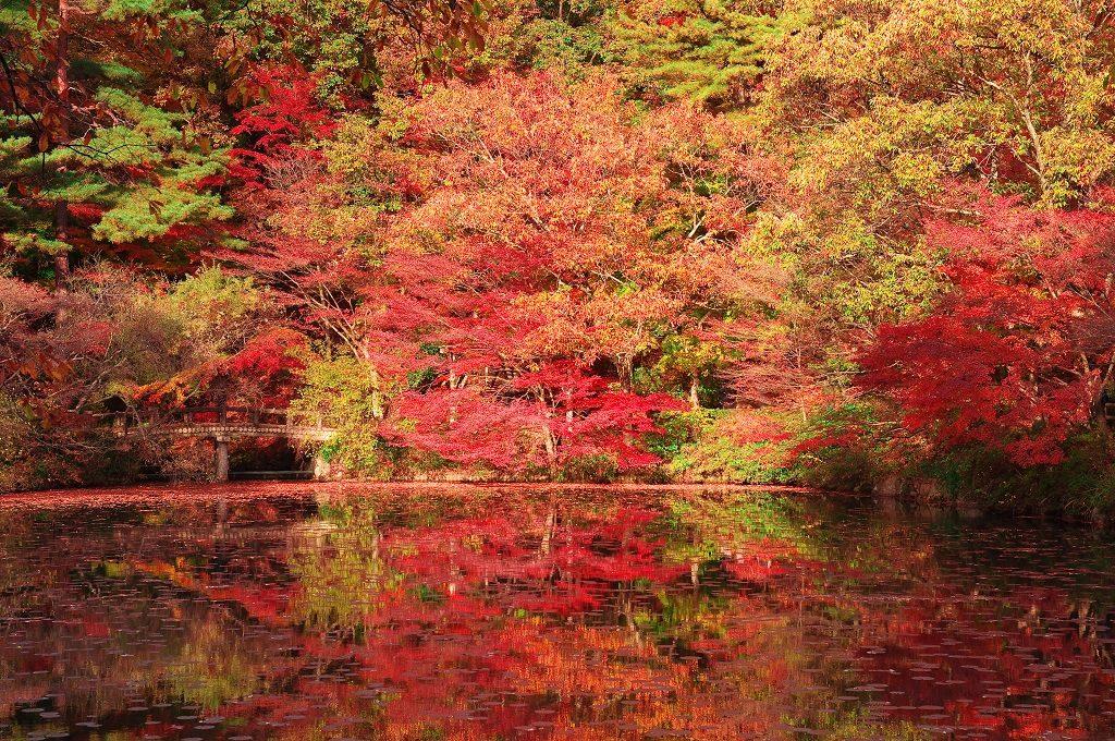 森林植物園の紅葉