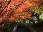 奥須磨公園の紅葉